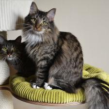 Bella i Kotał