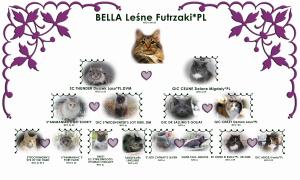 Rodowód kotki hodowlanej Bella Leśne Futrzaki*PL