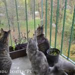 zabezpieczenie okien dla kotów