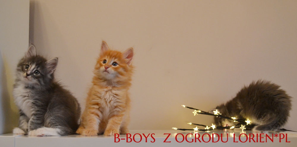 B-BOYS (2)
