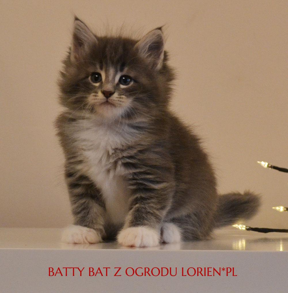 BATTY (2)