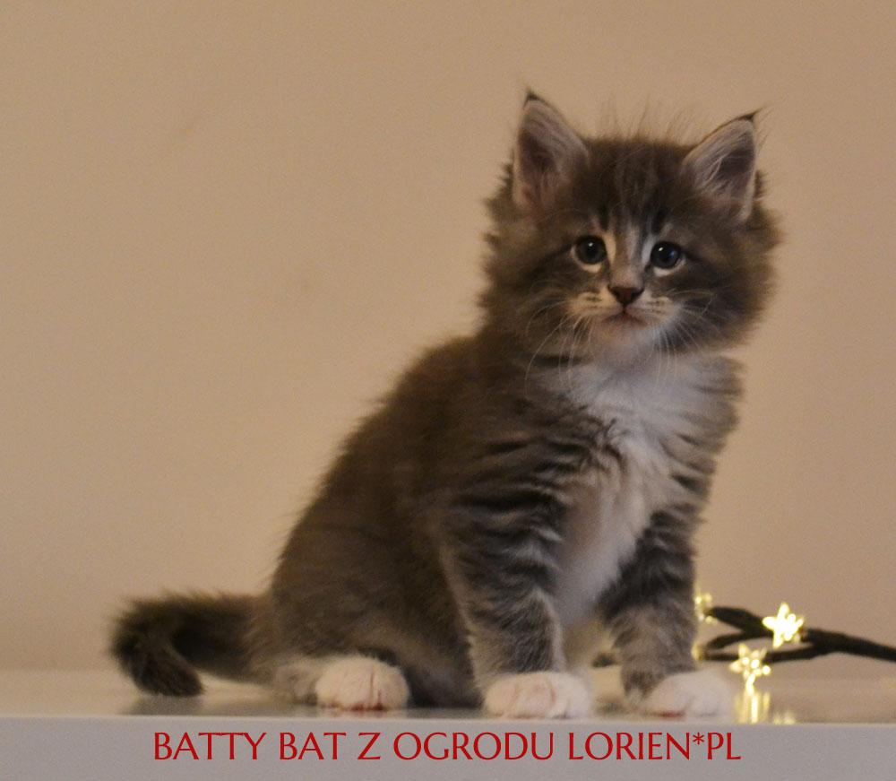 BATTY (3)