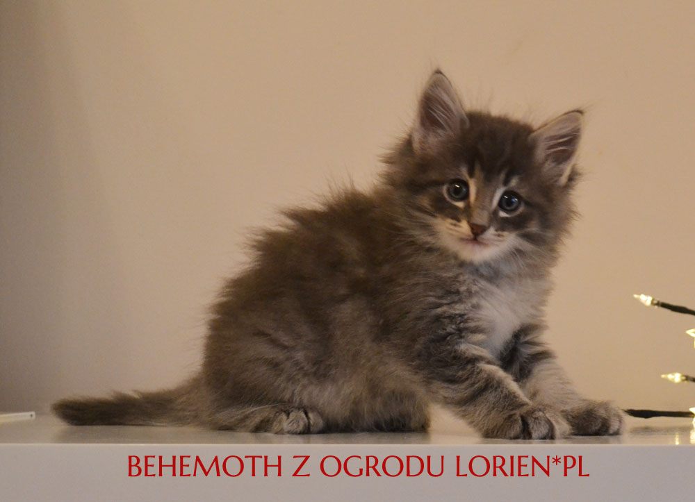 BEHEMOTH (2)
