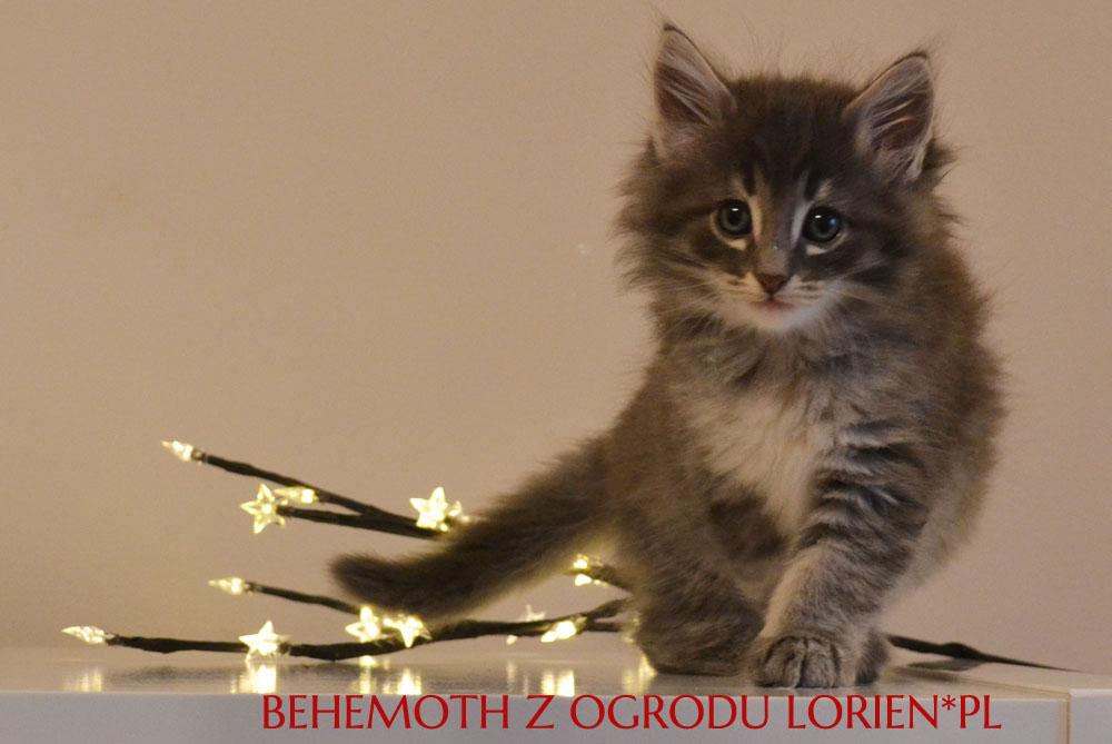 BEHEMOTH (4)
