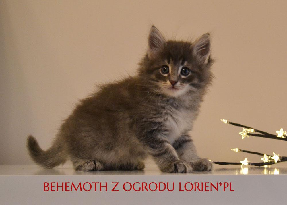 BEHEMOTH (6)