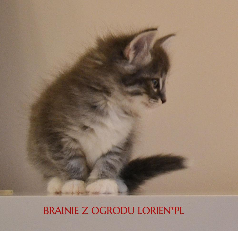 BRAINIE (2)