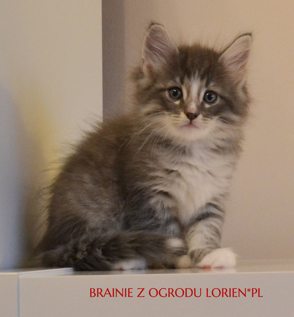 BRAINIE (3)