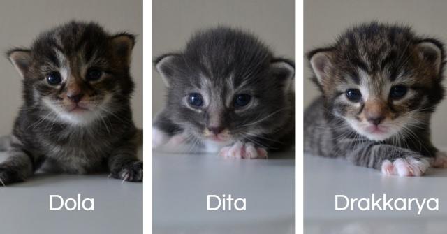 Dola, Dita, Drakkarya w wieku 2 tygodni